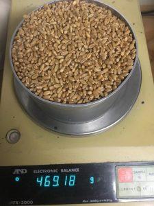 Trojan Wheat Baker Seed Co
