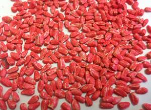 Safflower Baker Seed Co